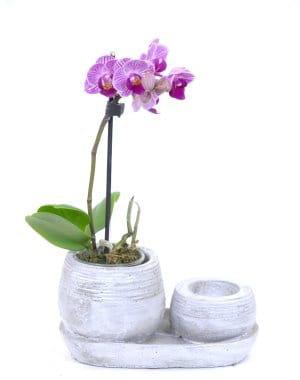 la d licatesse d 39 une mini orchid e no l 101 id es cadeaux pour elles journal des femmes. Black Bedroom Furniture Sets. Home Design Ideas