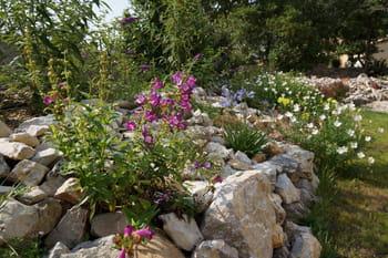 Un jardin sec et fleuri en Ardèche