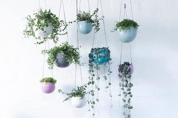 10 plantes d'intérieur àsuspendre