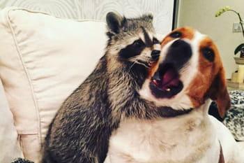 Instagram : ces animaux qui nous font cliquer