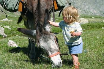 L'âne, le compagnon préféré des enfants