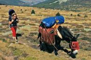 """""""La douceur naturelle de l'âne l'emportera toujours !"""""""