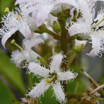 Des plantes aux vertus médicinales