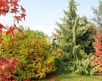 Que faire au jardin en octobre?