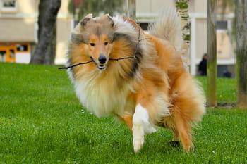 Les chiens se font acrobates