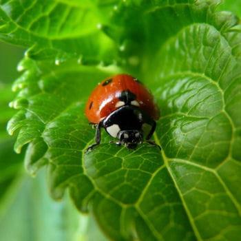 comprendre les insectes jardiner avec les enfants journal des femmes. Black Bedroom Furniture Sets. Home Design Ideas
