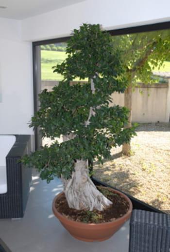 Plantes d 39 int rieur et plantes vertes conseils avec l for Plante verte interieur facile