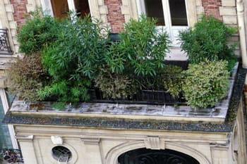 Balcon et terrasse : comment les rendre plus verts