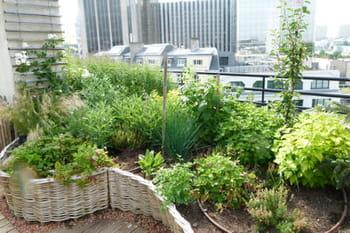 Potager actualit s et tendances sur le journal des femmes - Il faut cultiver notre jardin signification ...