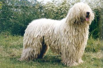 Les races de chiens les plus insolites