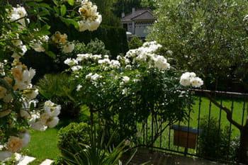 Visite d'un foisonnant jardin à l'anglaise