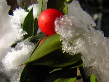 Les végétaux dans la lumière de l'hiver