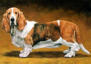 Des portraits d'animaux plus vrais que nature