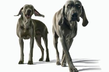 Portraits de chiens