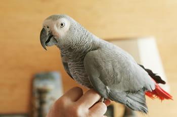 Vivre avec des perroquets