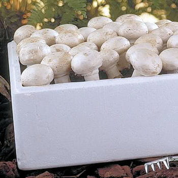 un coffret pour cultiver les champignons de paris le coup de coeur de la semaine journal des. Black Bedroom Furniture Sets. Home Design Ideas