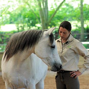 Apprendre à murmurer à l'oreille des chevaux