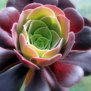 10 plantes au feuillage insolite