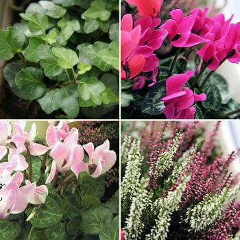 Cr ation d 39 une jardini re d 39 automne r aliser une for Jardiniere d automne