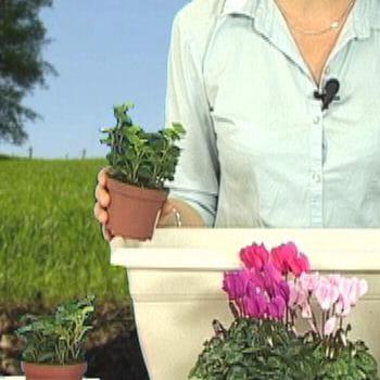 planter le feuillage r aliser une jardini re d 39 automne journal des femmes. Black Bedroom Furniture Sets. Home Design Ideas