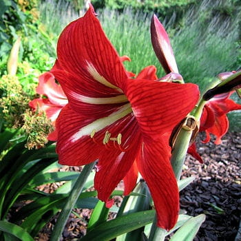 10 fleurs pour un jardin rouge