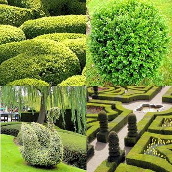 Réaliser ses propres sculptures végétales