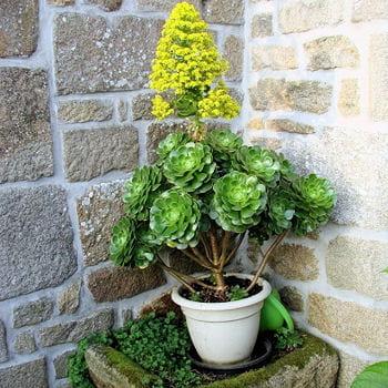 Protéger ses plantes en hiver : 10 règles d'or