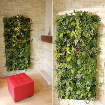 Mur v g tal d 39 int rieur le pas pas pratique for Mur vegetal exterieur en kit