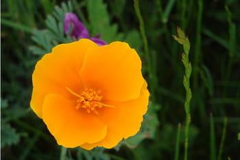 Floraison de fleurs sauvages