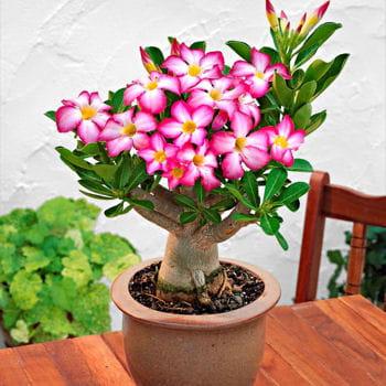 Des plantes pour meubler son intérieur