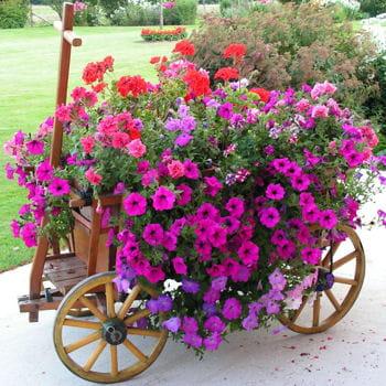 charrette un cache pot g ant l 39 art de la r cup 39 au jardin journal des femmes. Black Bedroom Furniture Sets. Home Design Ideas