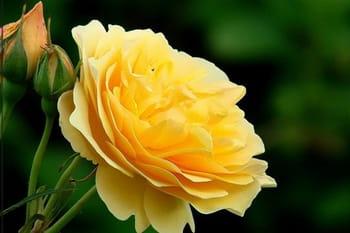 Des fleurs à votre image
