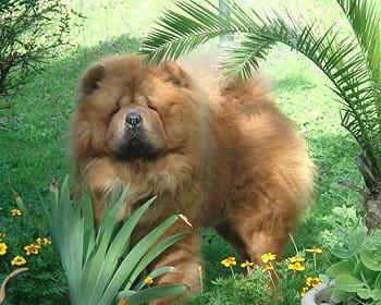 De grands chiens comme on les aime