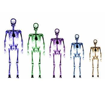 le nombre d'os réduit avec la croissance.
