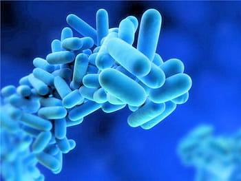 Le monde invisible des microbes