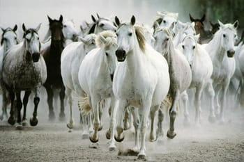 Sublimes chevaux