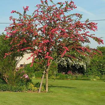 un arbre pour m tamorphoser votre jardin des arbres qui changeront l 39 allure de votre jardin. Black Bedroom Furniture Sets. Home Design Ideas