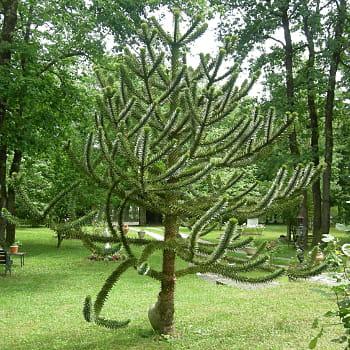 Pas d sesp rant du tout un arbre pour m tamorphoser for Quel arbre pour mon jardin