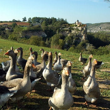 foie gras, spécialités du périgord en midi-pyrénées