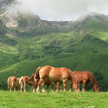 Familiarisez-vous avec l'univers du cheval