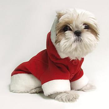 Des idées pour couvrir votre animal de cadeaux à Noël