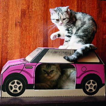 une voiture pour chat des objets insolites pour vos animaux de compagnie journal des femmes. Black Bedroom Furniture Sets. Home Design Ideas