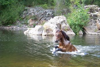Les lectrices admiratrices de chevaux