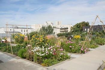 Un jardin suspendu sur le toit d'un gymnase parisien