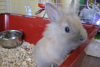 Nutty, un lapin nain malicieux