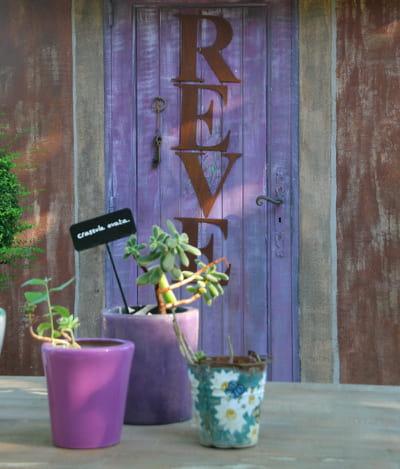 Le crassula ovata la petite plante grasse 15 mini cact es et succulentes robustes pour - Mini plante grasse mariage ...