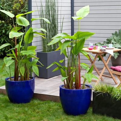 Pot braga de truffaut jardini res et pots de fleurs color s journal des femmes - Truffaut jardiniere ...