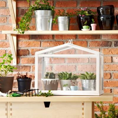 Dans le salon ou sur le balcon plante d 39 int rieur je for Ikea plantes d interieur