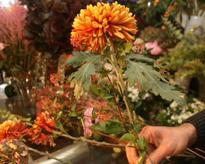 choisir les premières fleurs du bouquet