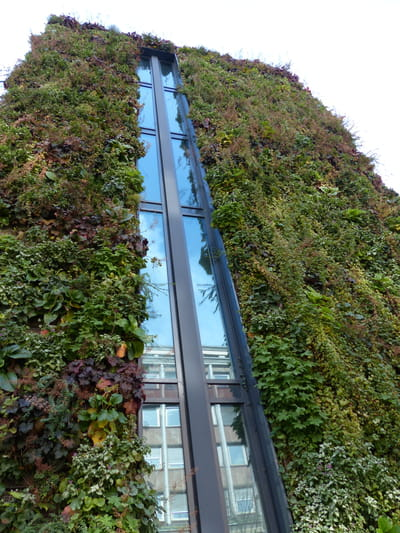 Comment installer un mur v g tal construire un mur for Construire mur vegetal exterieur